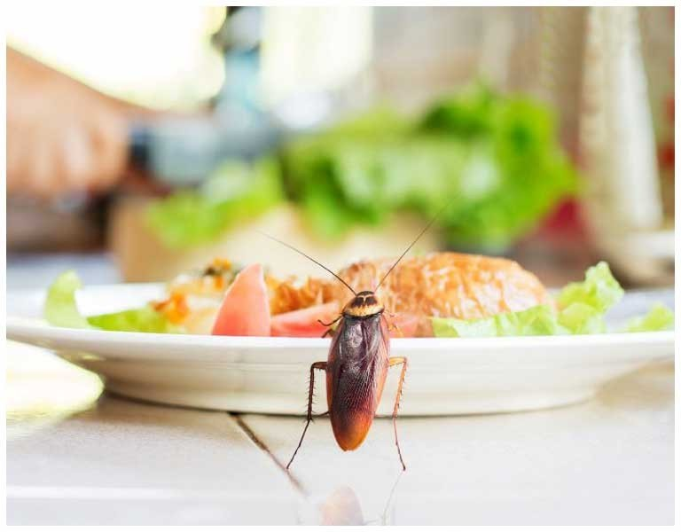 Insecticidas para el hogar